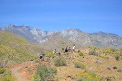 Palm Canyon Trail