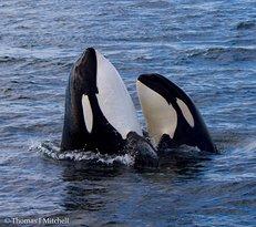 BC Whale Tours