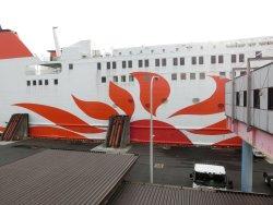 Ferry Sunflower