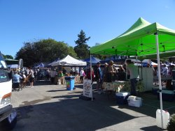 Tauranga Farmer's Market