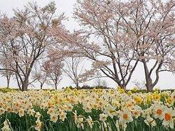 Tamagawa Park