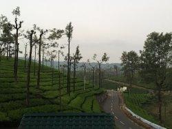 Paradise of Tea estates