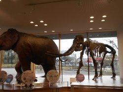 Toyama Science Museum