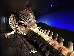 Muzeum Wielorybów w Húsavík