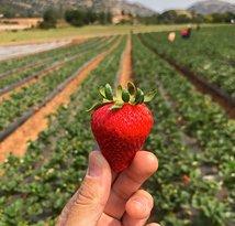Kenny's Strawberry Farm