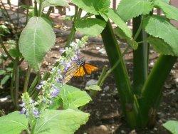 Cozumel Butterfly & Botanical Gardens