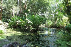 Cooktown Botanical Gardens