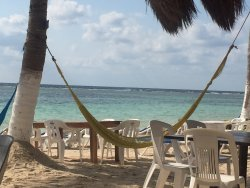 The Tipsy Turtle Restaurant & Barefoot Beach Club