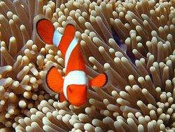 Snorkeling Menjangan