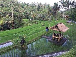 Bali Ari Tours & Driver - Day Tours