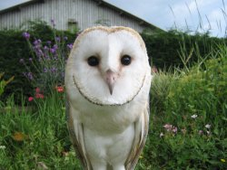 Lightwater Falconry Centre