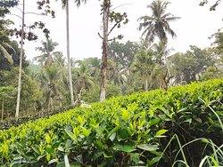 Nandana Tea Factory