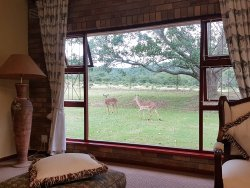 Mpongo Park Game Private Reserve