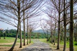 19 Hectares Grassland Hsin Chu City, Taiwan