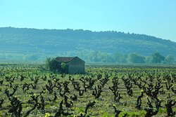 Le Vin a la Bouche- Celine Viany