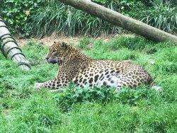 Zoo de Santillana
