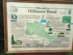 Hillhouse Wood