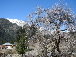 Why go switzerland for snow or Japan for Cherry Blossom.....????