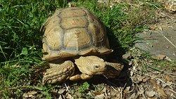Otras especias de tortuga