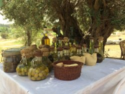 Neot Kedumim Biblical Landscape Reserve