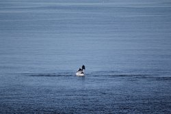 RSPB Dolphinwatch