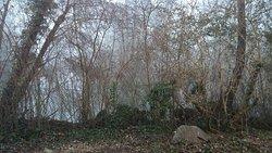 vue sur l'arrière du batiment : la riviere