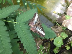 Earnley Butterflies Birds and Beasts