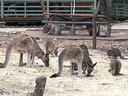 Australia Walkabout Wildlife Park