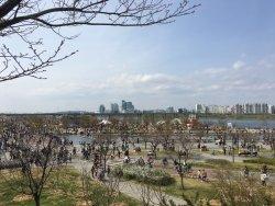 Mangwon Hangang Park