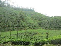 Thrissanku Hills