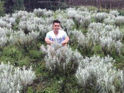 Kasna Flower Field