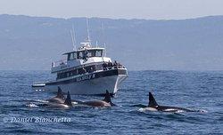 蒙特雷湾观鲸之旅