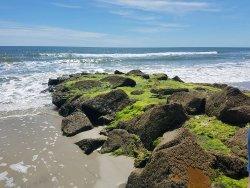Pawleys Island Beach Service