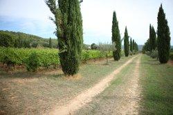 Domaine Valcolombe