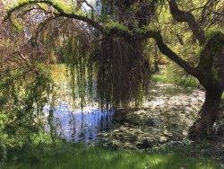 Erdotelki Arboretum