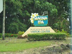 Mauna Loa Macadamia Nut Farm and Factory