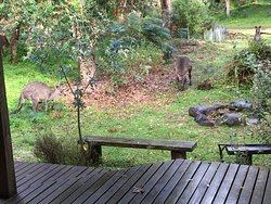 Venus Bay Eco Retreat