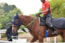 Japan Racing Association Racehourses Research Institute Tokiwa Branch