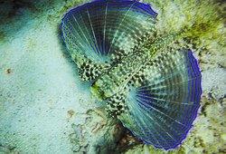 Seahorse Divers Barbados