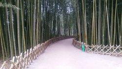 Taehwa River Seepri Bamboo Grove