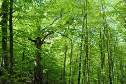 Riserva Naturale Orientata e Riserva MaB Montedimezzo