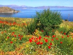 Votania Herbs