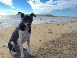 Dog friendly beach across the road