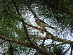 Indrio Savannahs Preserve