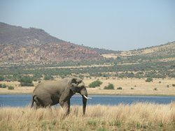 Pilanesberg Safaris and Tours
