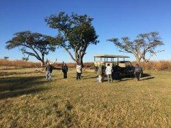 Incredible first Safari experience