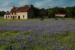 The Bluebonnet House