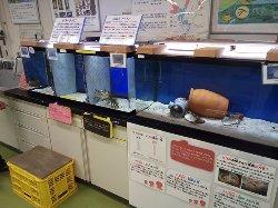 小さな水槽が多数あって、それぞれ丁寧な説明があります。