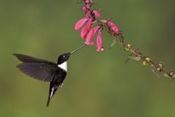 Neotropical Nature & Birding Trips