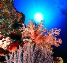 Dive Kingdom International